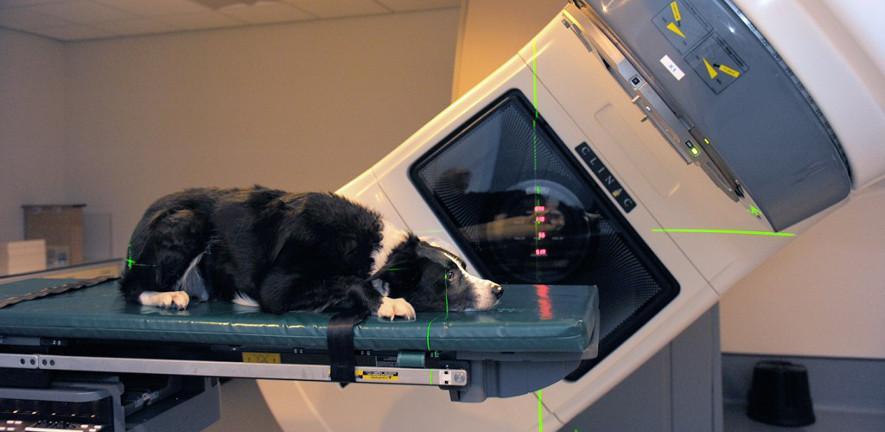 Dog in scanner 885 x 432