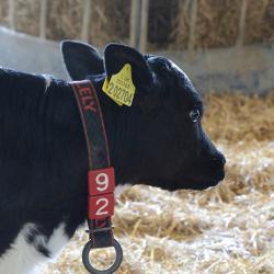 Farm animals 250